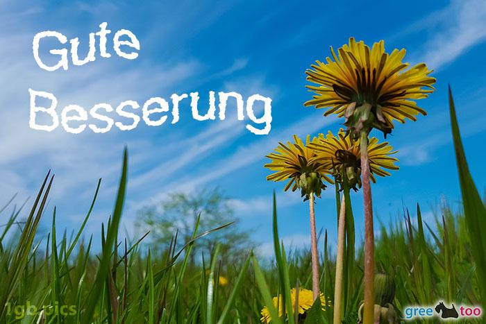 Loewenzahn Himmel Gute Besserung Bild - 1gb.pics
