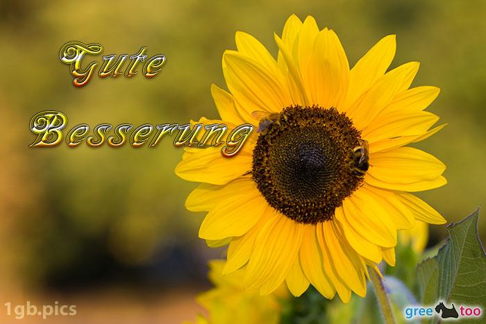 Sonnenblume Bienen Gute Besserung Bild - 1gb.pics