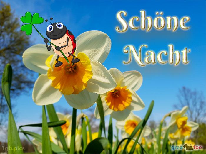 Schoene Nacht Bild - 1gb.pics
