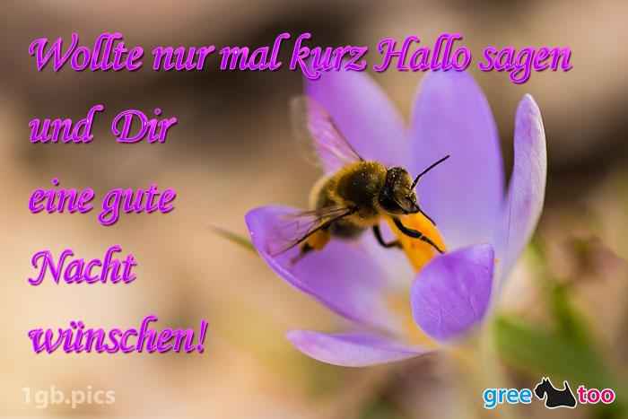 Krokus Biene Eine Gute Nacht Bild - 1gb.pics