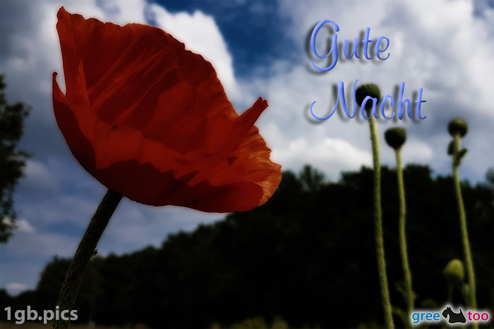 Mohnblume Gute Nacht Bild - 1gb.pics
