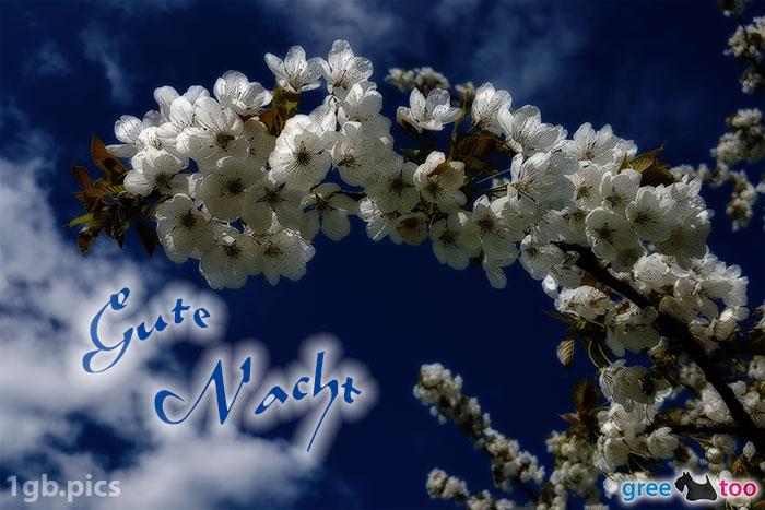 Kirschblueten Gute Nacht Bild - 1gb.pics