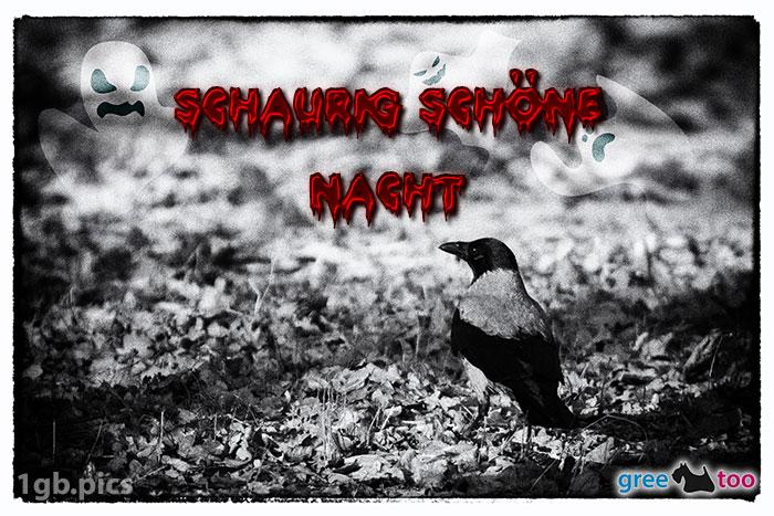 Kraehe Schaurig Schoene Nacht Bild - 1gb.pics