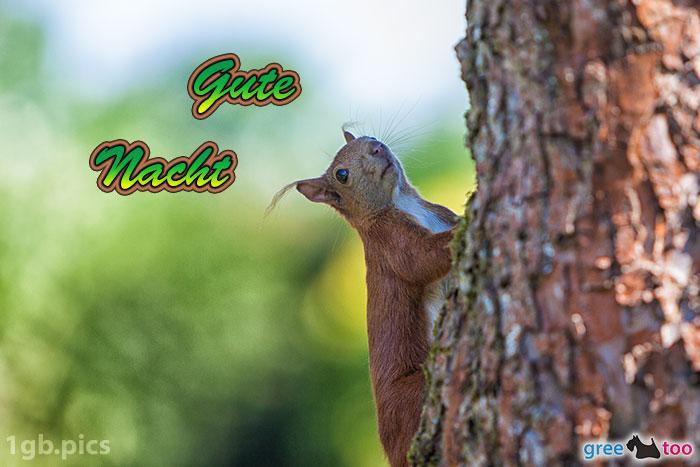 Eichhoernchen Gute Nacht Bild - 1gb.pics
