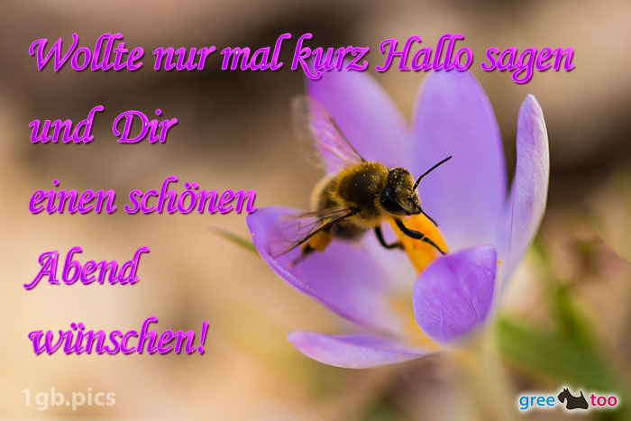 Krokus Biene Einen Schoenen Abend Bild - 1gb.pics