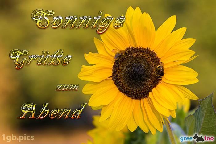 Sonnenblume Bienen Zum Abend Bild - 1gb.pics