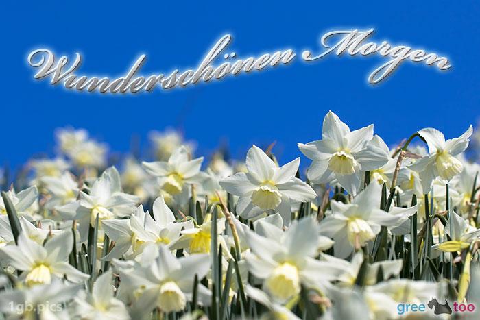 Wunderschoenen Morgen Bild - 1gb.pics