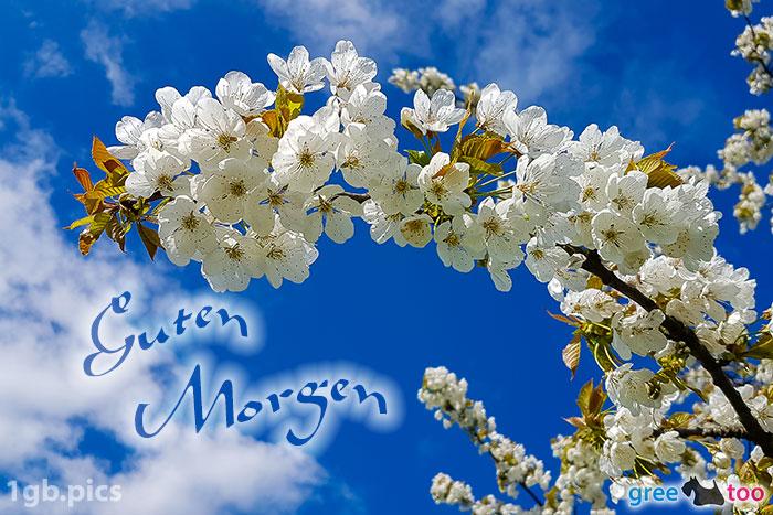 Kirschblueten Guten Morgen Bild - 1gb.pics