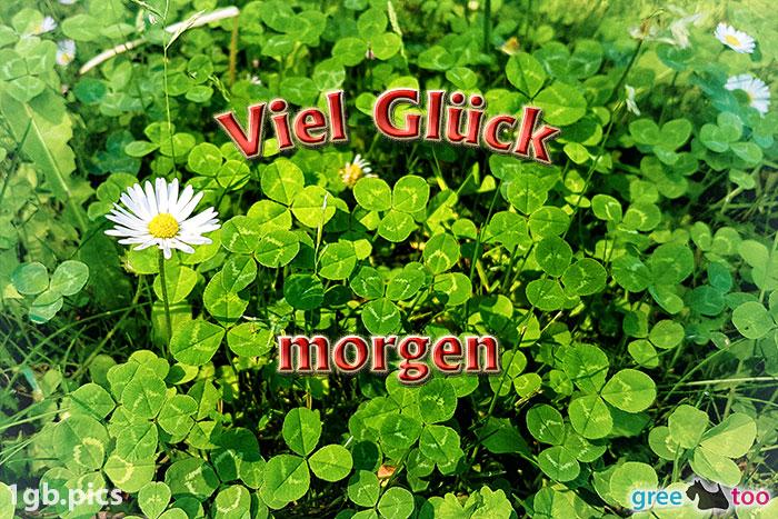 Klee Gaensebluemchen Viel Glueck Morgen Bild - 1gb.pics