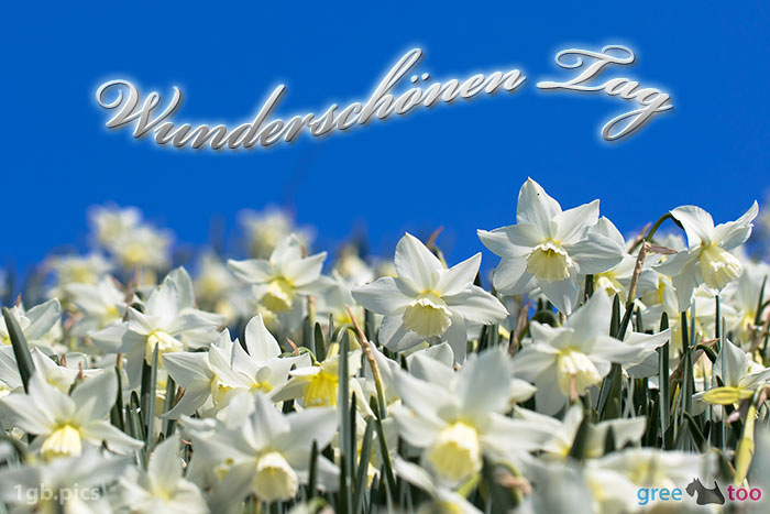 Wunderschoenen Tag Bild - 1gb.pics