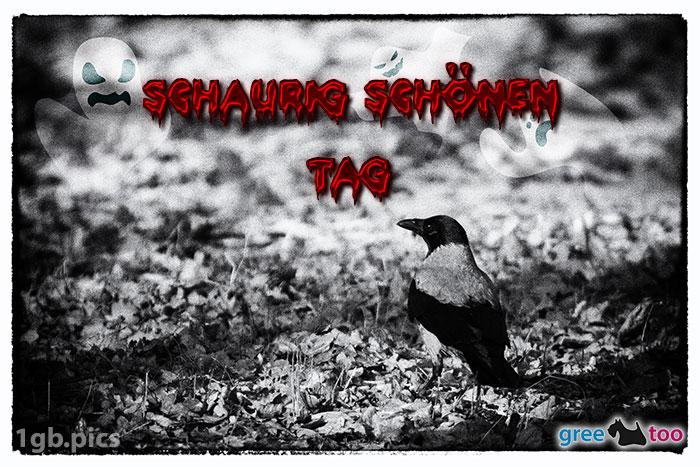 Kraehe Schaurig Schoenen Tag Bild - 1gb.pics