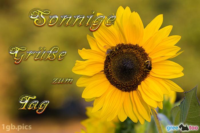 Sonnenblume Bienen Zum Tag Bild - 1gb.pics