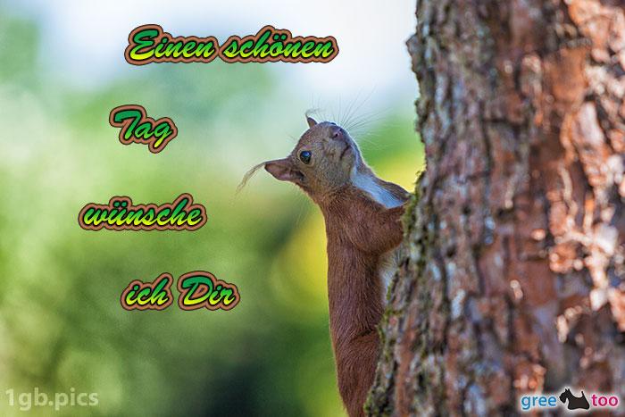 Eichhoernchen Einen Schoenen Tag Bild - 1gb.pics