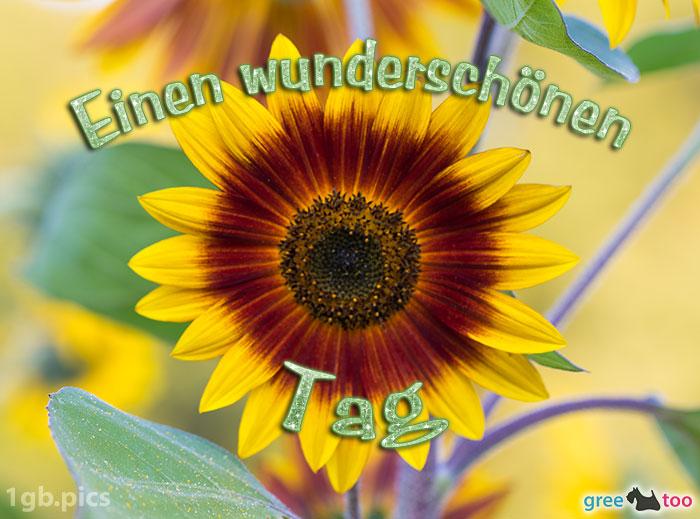 Sonnenblume Einen Wunderschoenen Tag Bild - 1gb.pics