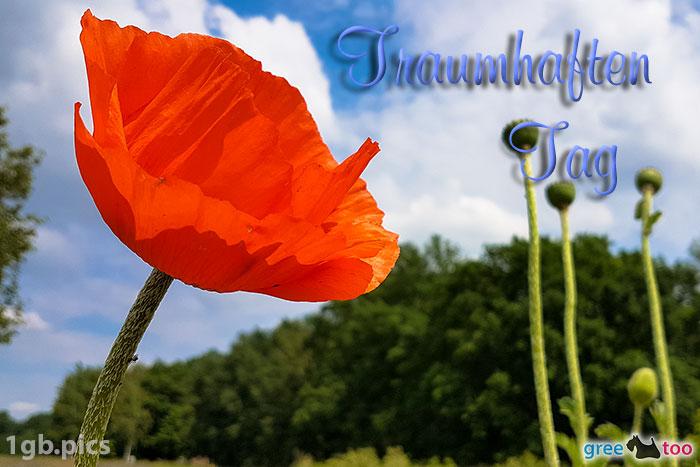 Mohnblume Traumhaften Tag Bild - 1gb.pics