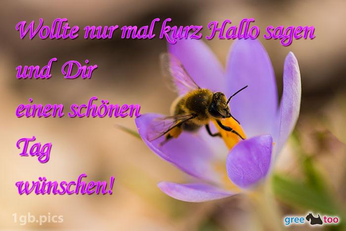 Krokus Biene Einen Schoenen Tag Bild - 1gb.pics
