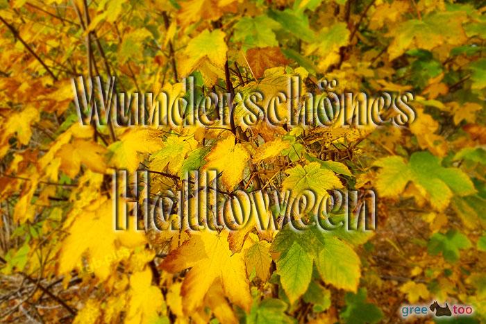 Wunderschoenes Halloween Bild - 1gb.pics