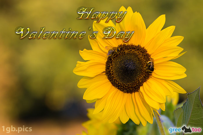 Sonnenblume Bienen Happy Valentines Day Bild - 1gb.pics