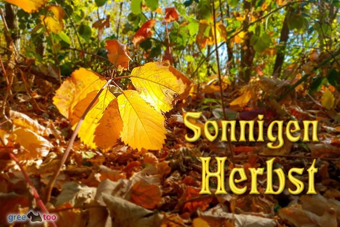 Sonnigen Herbst Bild - 1gb.pics