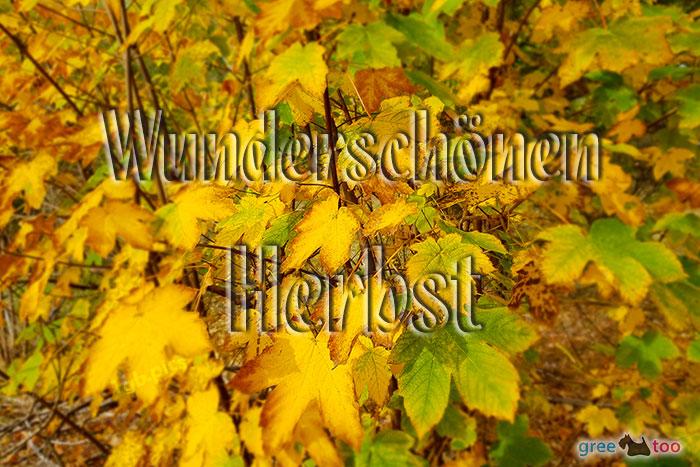 Wunderschoenen Herbst Bild - 1gb.pics