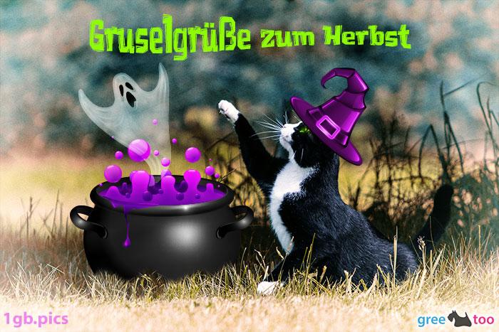 Katze Gruselgruesse Zum Herbst Bild - 1gb.pics
