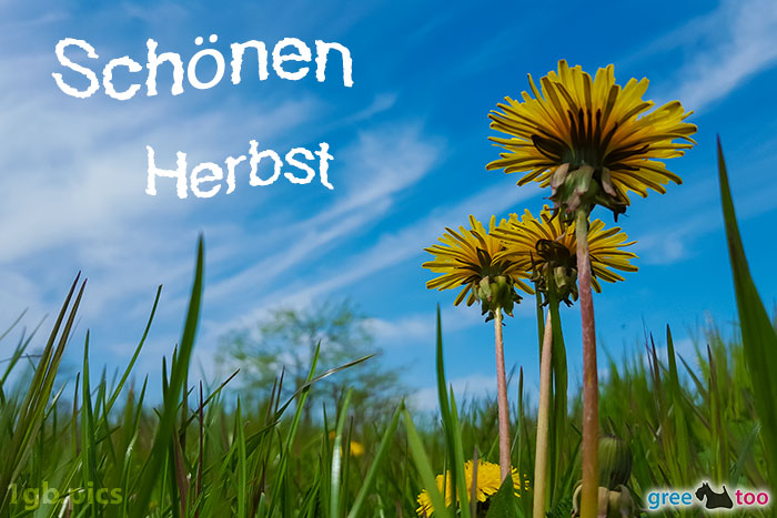 Loewenzahn Himmel Schoenen Herbst Bild - 1gb.pics