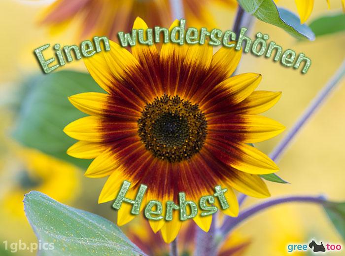Sonnenblume Einen Wunderschoenen Herbst Bild - 1gb.pics
