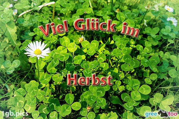Klee Gaensebluemchen Viel Glueck Im Herbst Bild - 1gb.pics