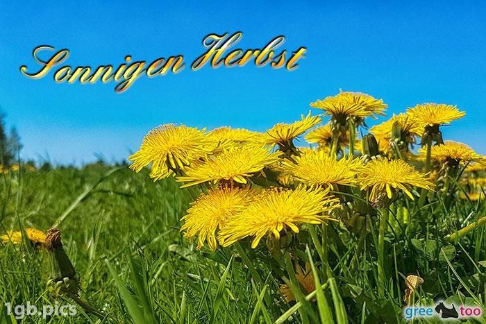 Loewenzahn Sonnigen Herbst Bild - 1gb.pics