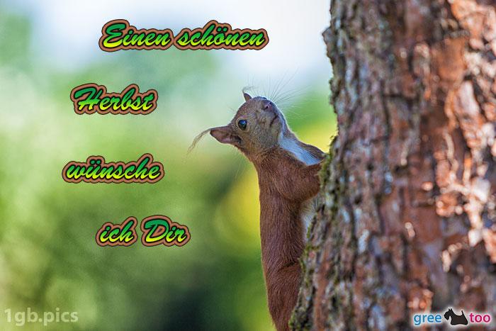 Eichhoernchen Einen Schoenen Herbst Bild - 1gb.pics