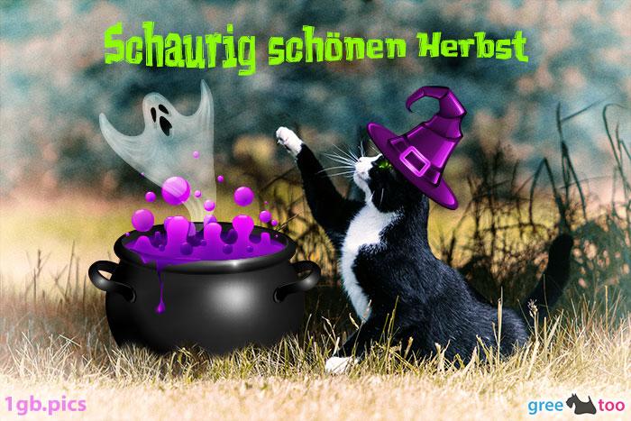 Katze Schaurig Schoenen Herbst Bild - 1gb.pics