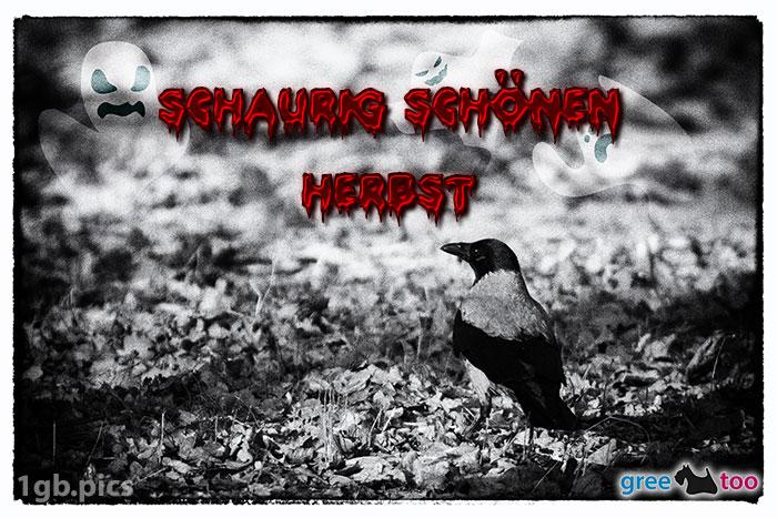 Kraehe Schaurig Schoenen Herbst Bild - 1gb.pics