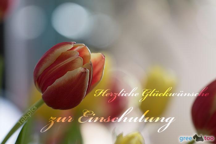 Herzliche Glückwünsche zur Einschulung von 1gbpics.com