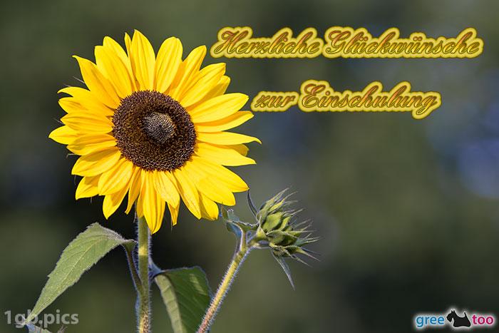 Sonnenblume Herzliche Glueckwuensche Zur Einschulung Bild - 1gb.pics