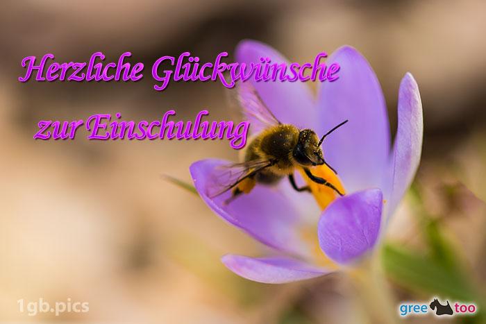 Krokus Biene Herzliche Glueckwuensche Zur Einschulung Bild - 1gb.pics