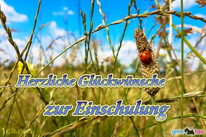 Marienkaefer Herzliche Glueckwuensche Zur Einschulung Bild - 1gb.pics