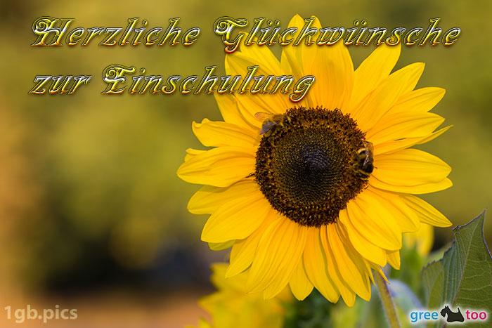 Sonnenblume Bienen Herzliche Glueckwuensche Zur Einschulung Bild - 1gb.pics