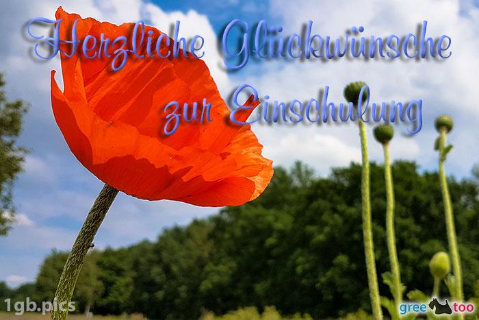 Mohnblume Herzliche Glueckwuensche Zur Einschulung Bild - 1gb.pics