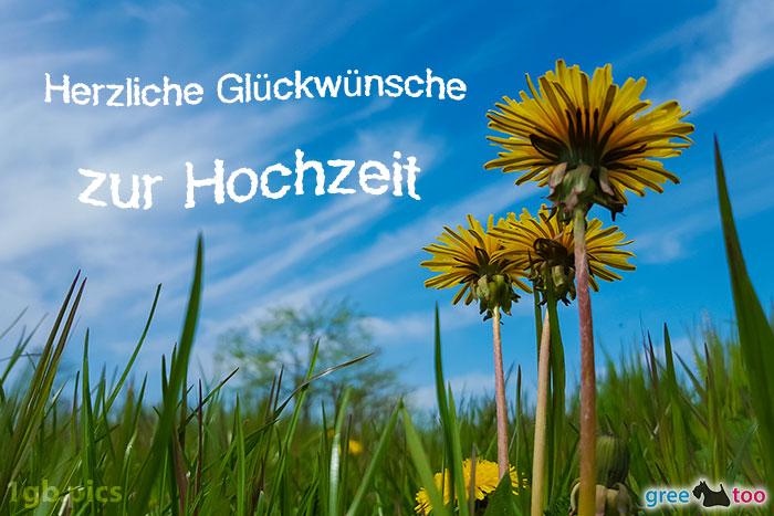 Loewenzahn Himmel Herzliche Glueckwuensche Zur Hochzeit Bild - 1gb.pics