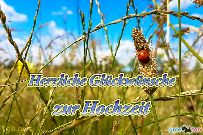 Marienkaefer Herzliche Glueckwuensche Zur Hochzeit Bild - 1gb.pics