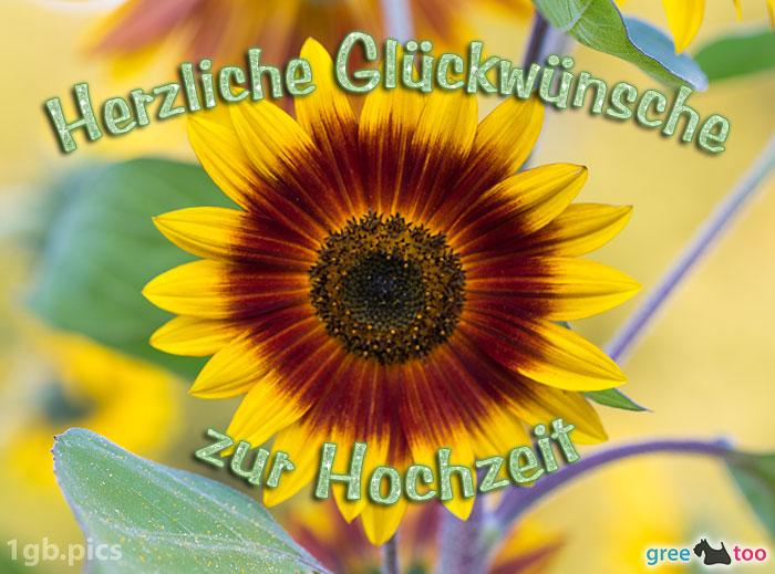 Sonnenblume Herzliche Glueckwuensche Zur Hochzeit Bild - 1gb.pics