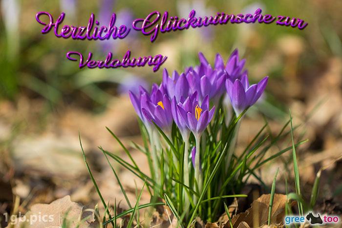Krokusstaude Herzliche Glueckwuensche Zur Verlobung Bild - 1gb.pics