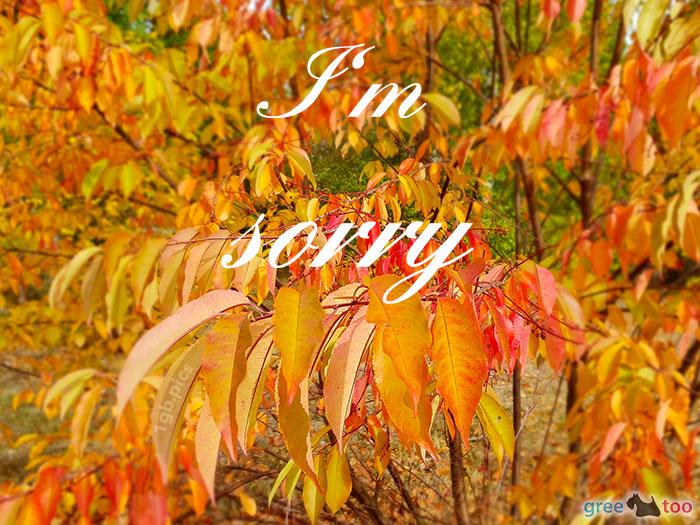 I Am Sorry Bild - 1gb.pics
