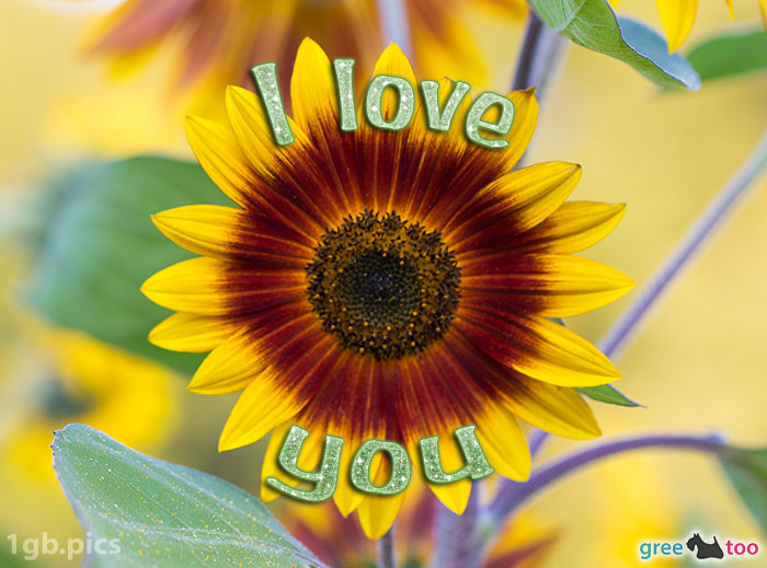 Sonnenblume I Love You Bild - 1gb.pics
