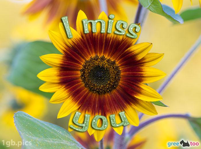 Sonnenblume I Miss You Bild - 1gb.pics