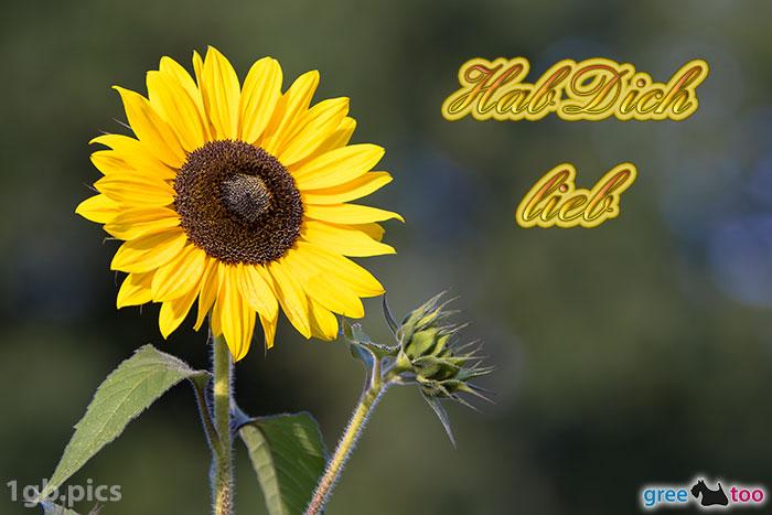 Sonnenblume Hab Dich Lieb Bild - 1gb.pics