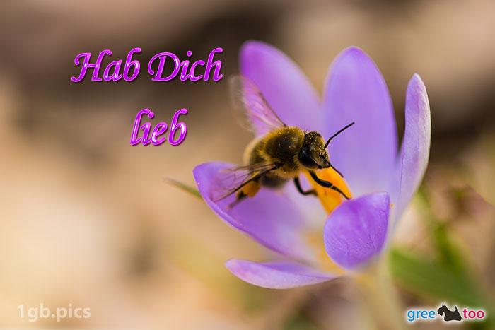 Krokus Biene Hab Dich Lieb Bild - 1gb.pics