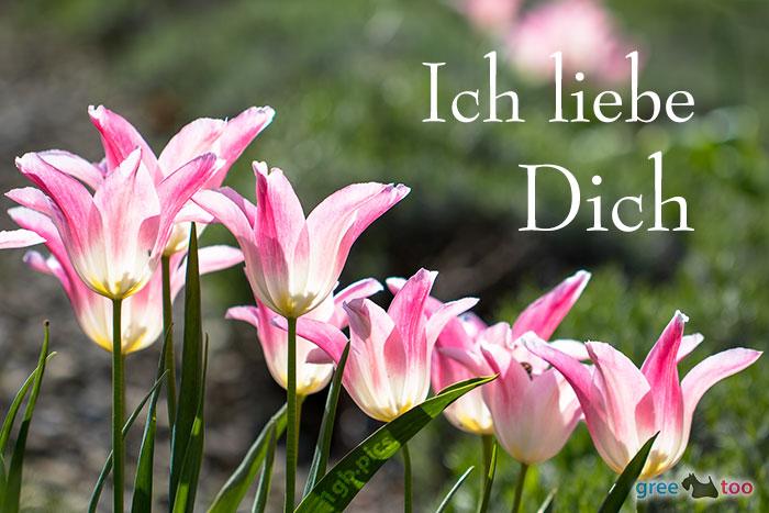 Ich Liebe Dich Bild - 1gb.pics