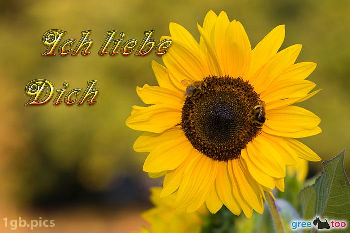 Sonnenblume Bienen Ich Liebe Dich Bild - 1gb.pics