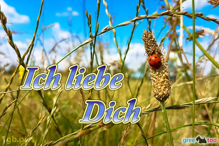 Marienkaefer Ich Liebe Dich Bild - 1gb.pics